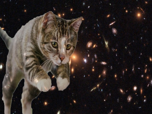 Food and cats from outer space