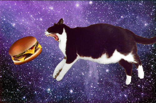 food and cats from outer space cipria